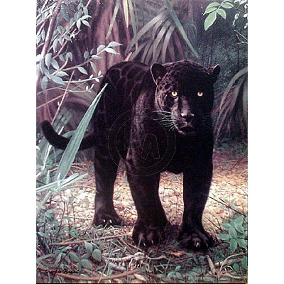 Black Jaguar by Charles Frace
