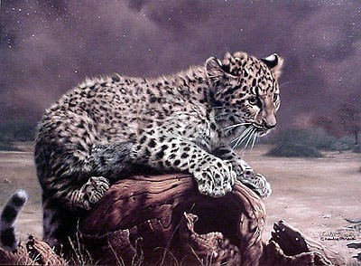 African Leopard Cub By Charles Frace Charles Frace Artist France, country of northwestern europe. african leopard cub by charles frace